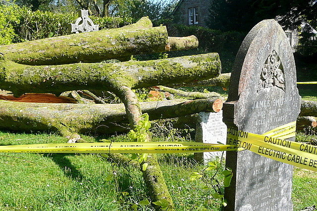Harford churchyard, storm damage (5)