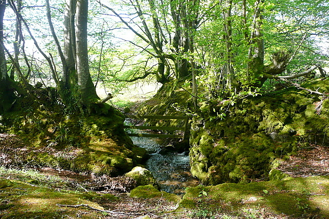 Stream at Hall Cross