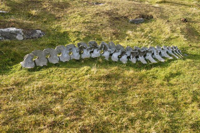 Whale vertebrae, Breiwick, Ham Ness