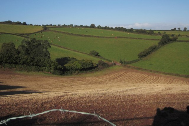 Fields above Edginswell