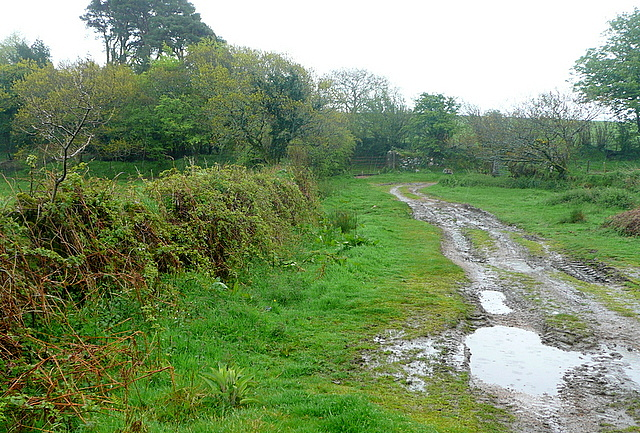 Bridleway towards Aish Ridge