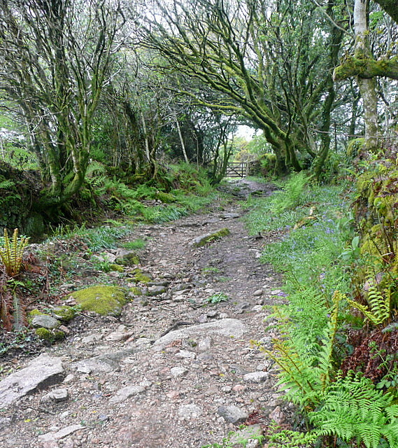 Bridleway to Zeal