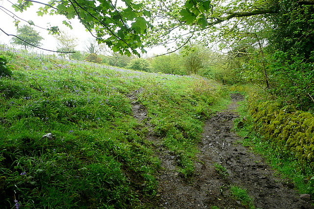 Bridleway past Overbrent Woods