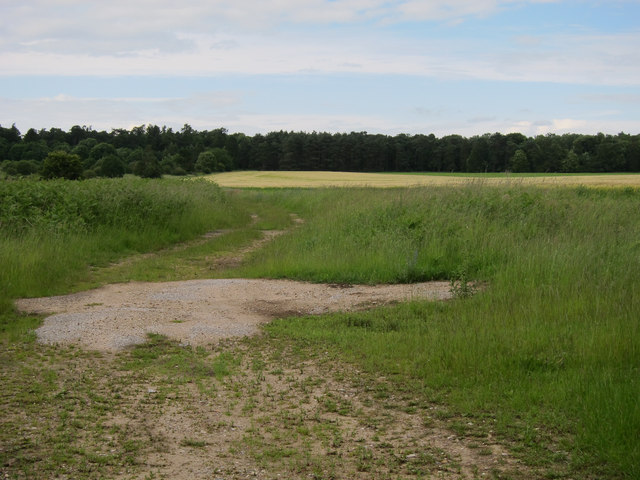 Looking towards Belvedere Wood