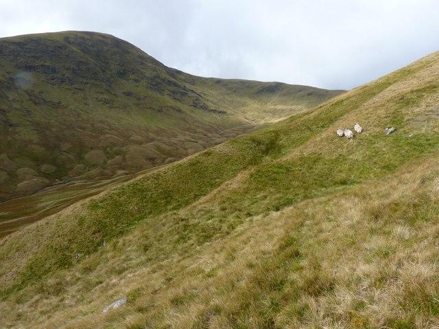 Sheep high in Coire nan Aighean