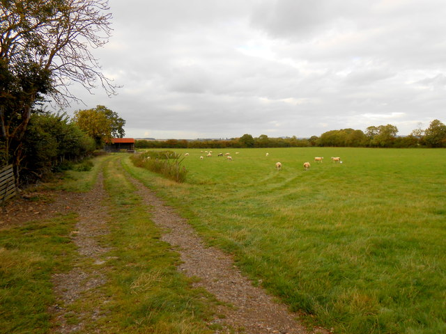 Fields off the Northend Road