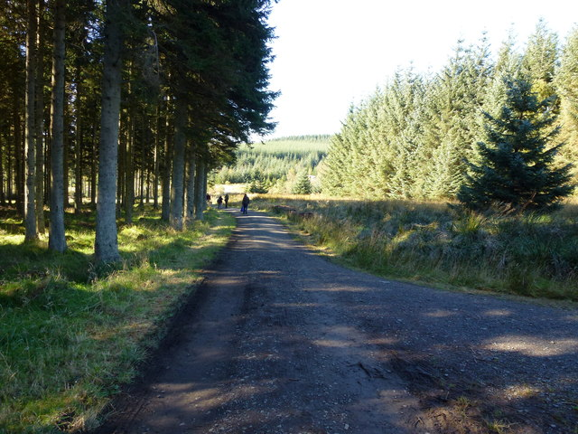 Forestry track in Kielder Forest