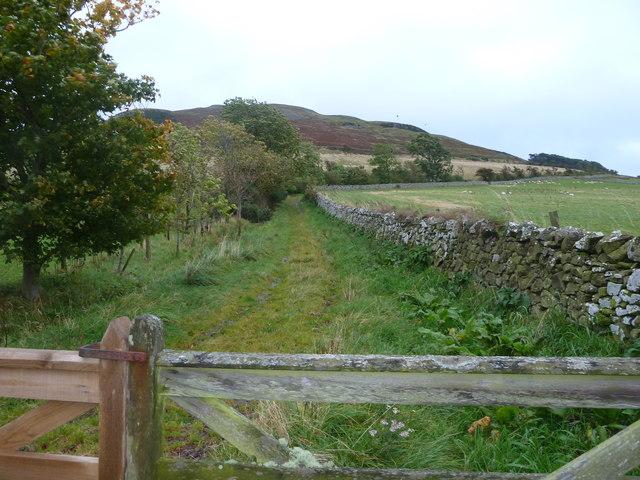 Farm Track near Hayhope