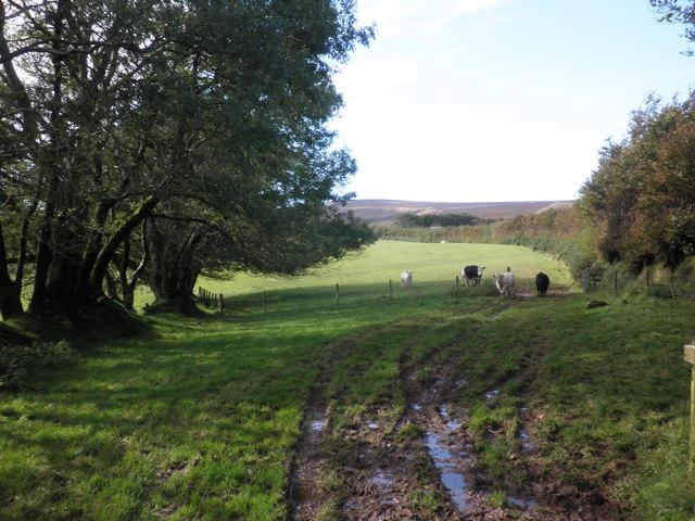 Pasture, near Spangate Land