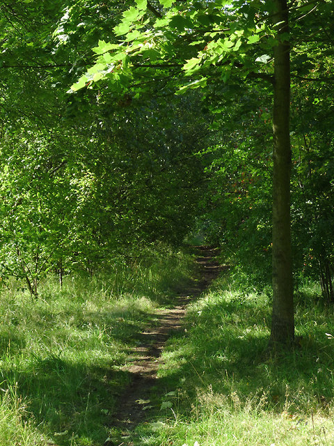 Woodland track in Harding's Wood, Staffordshire