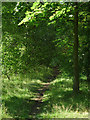 SJ8354 : Woodland track in Harding's Wood, Staffordshire by Roger  Kidd