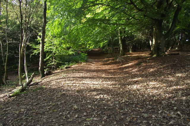 Woodland trail at Witton Park