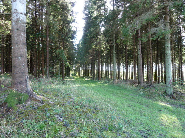 Forestry track in Linchball Wood