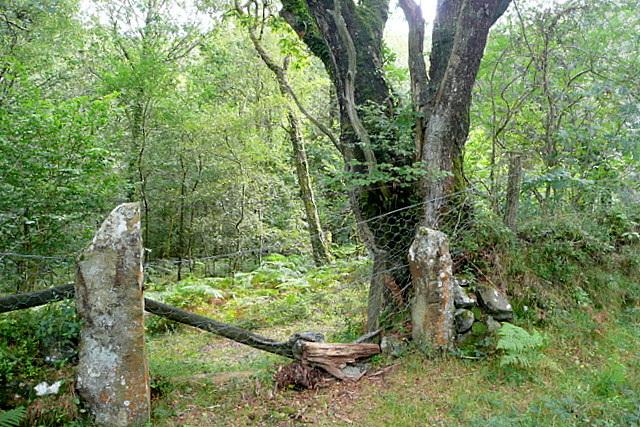 Gateway into Yarner Wood