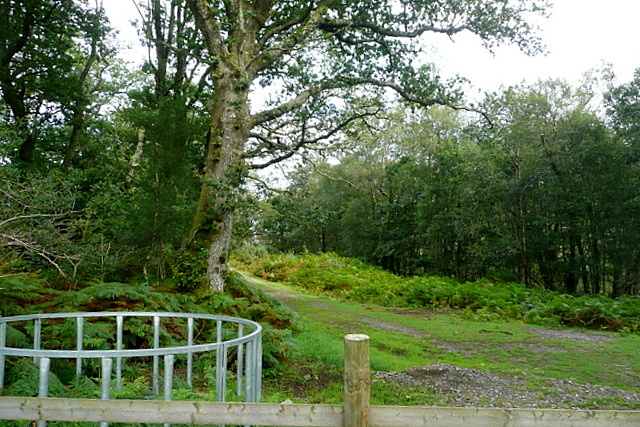 Access to Yarner Wood
