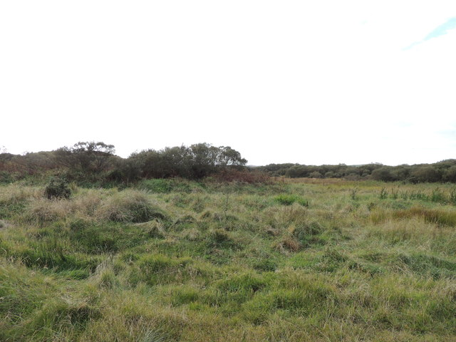 Heath Land near Clayshant
