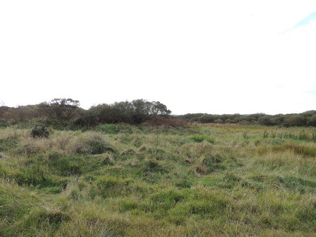Heath Land near Clayshant