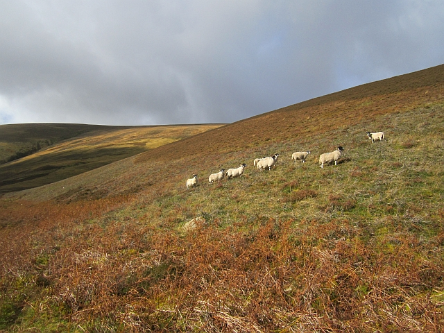 Sheep, Glen Sax