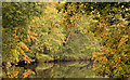 J3268 : Autumn leaves, River Lagan, Belfast by Albert Bridge