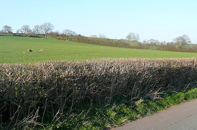Pasture near Llanddew