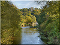 SJ9091 : River Tame, Reddish Vale Country Park (Tiviot Dale) by David Dixon