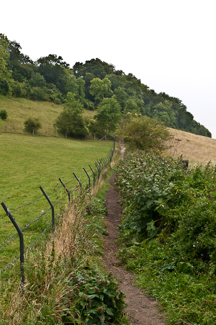 Towards Broom Wood