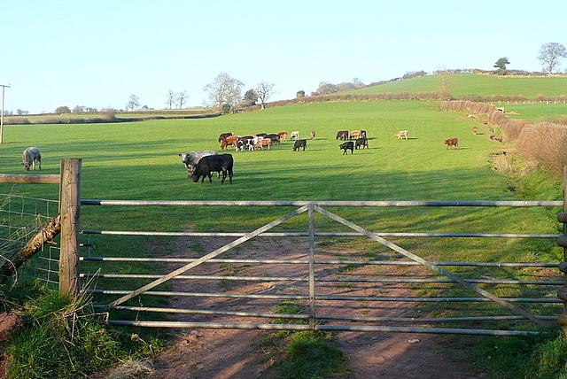 Pasture near Ty'n-y-caeau