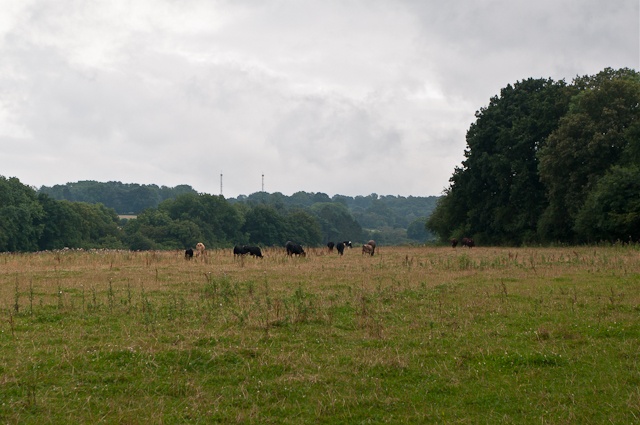 Towards Knockholt