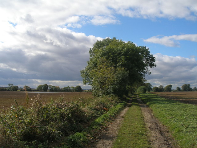 Lane to the north of Kellington Marsh