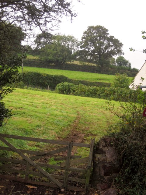 Fields above Shaldon