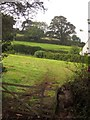 SX9372 : Fields above Shaldon by Derek Harper