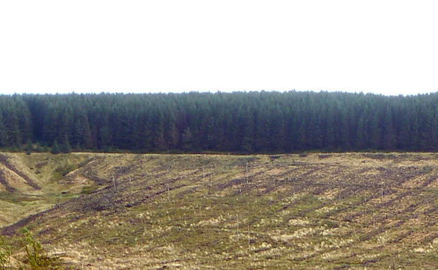 Forestry and Clearfell on Quickningair Hill