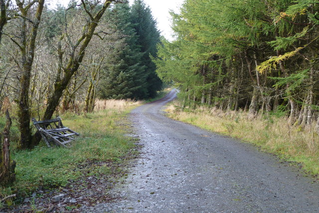 Forestry road near Over Dalgliesh