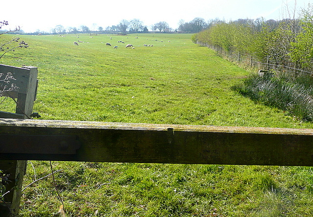 Pasture near Huntscott