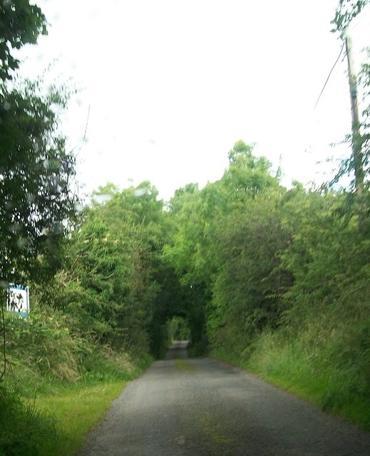 "Woodland ""tunnel"" on the minor road north-east of Annafarney Bridge"