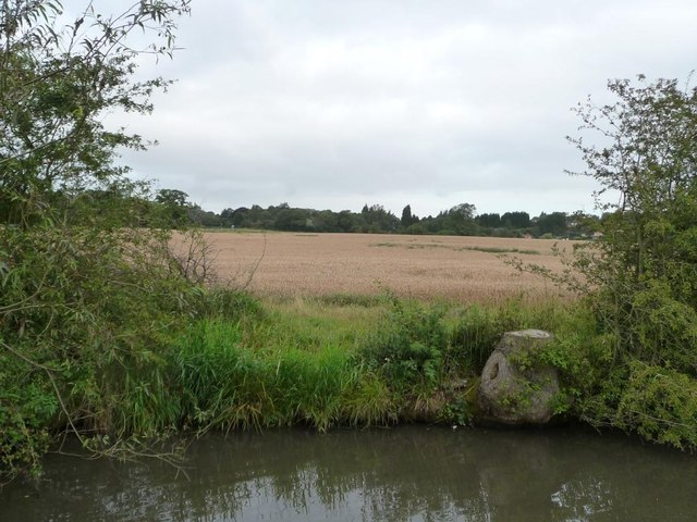 Wheatfield on the west bank of the canal