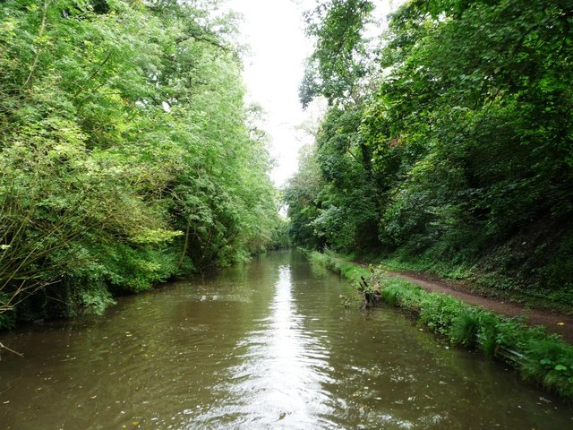 Tree-lined cutting, Worcs & Birmingham Canal