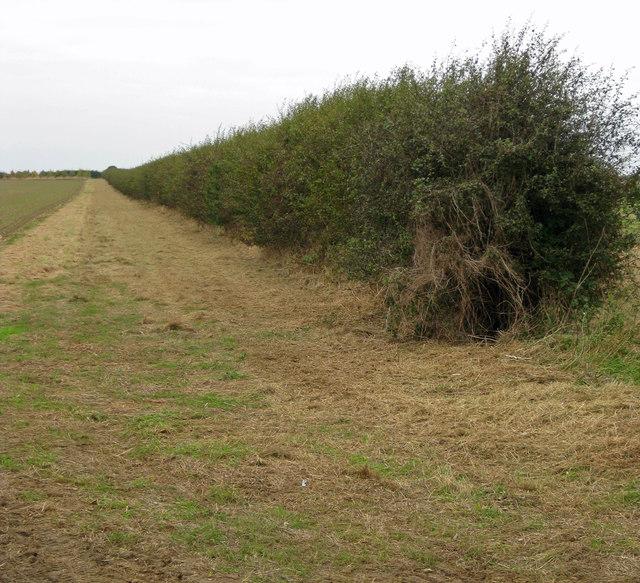 Hedgerow near Burnham