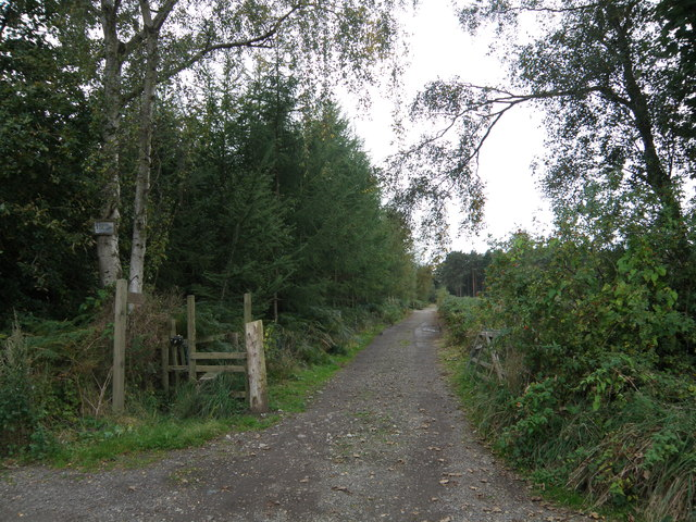 Track  from  Sand  Lane  into  Folly  Wood