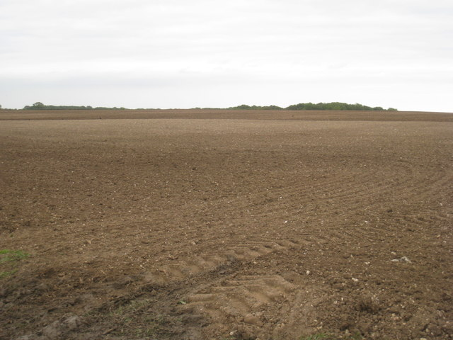 Sown field at Walesby Top