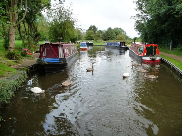 Swan family and moored narrowboats near bridge 60