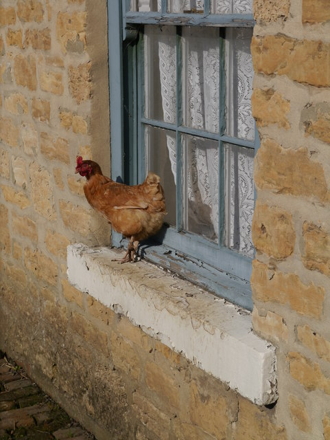 Fowled Window Ledge, Beamish Open Air Museum