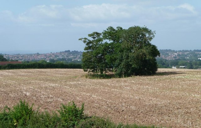 Clump of trees in a stubble field