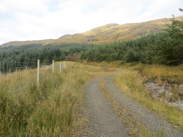 Forestry road above Loch Eck