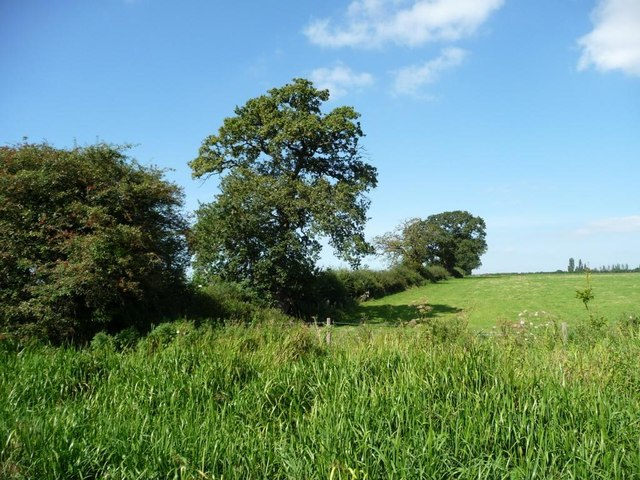 Field boundary with trees
