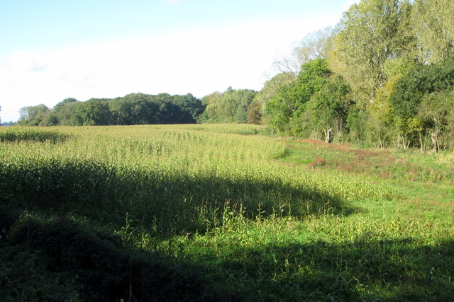 Fishpond Spinney at the far edge of the field