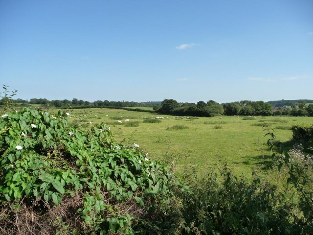 Pasture east of Whitford Bridge