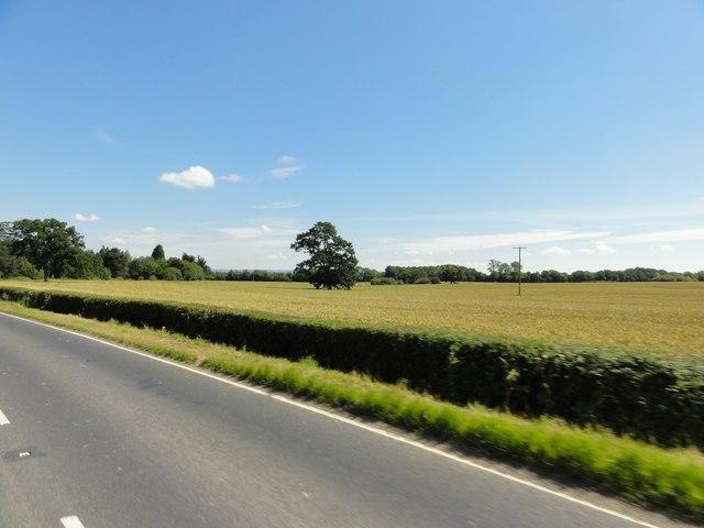 Biddenden, Tenterden Road