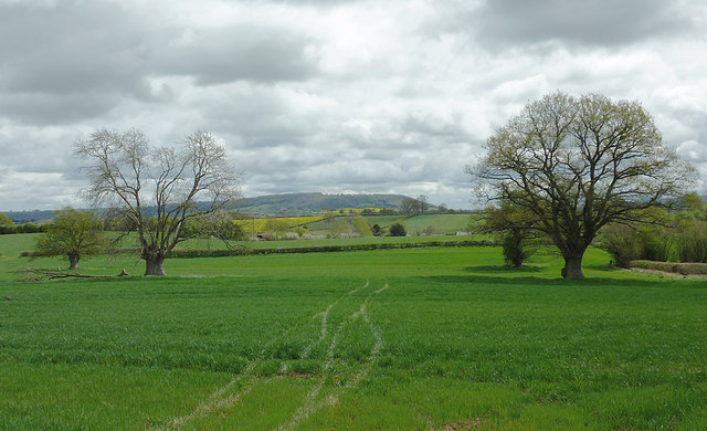 Farmland north of Dilwyn, Herefordshire