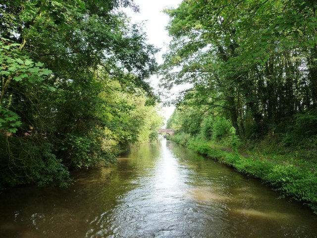 Tree-lined cutting, Worcester and Birmingham Canal